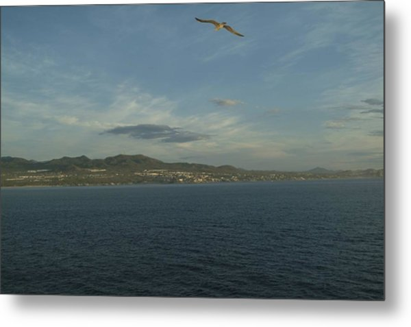 Metal Print featuring the photograph Solo Flight by Ralph Jones