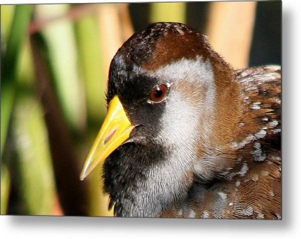 Sora Head Shot Metal Print