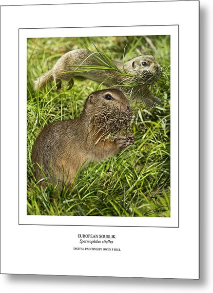 Sousliks Collecting Bedding Metal Print by Owen Bell
