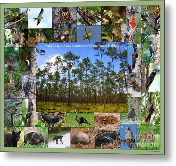 Southeastern Pine Forest Wildlife Poster Metal Print