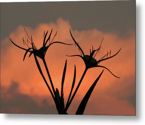 Spider Lilies At Sunset Metal Print