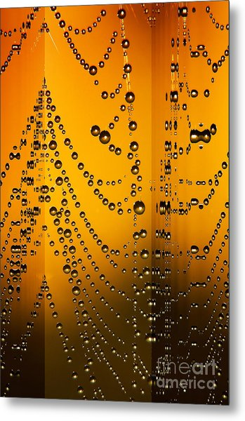 Spider Web Reflections Metal Print