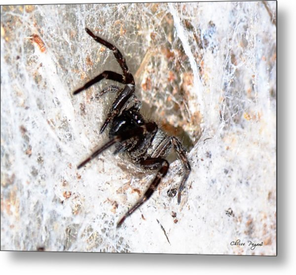 Spiders Trap Metal Print