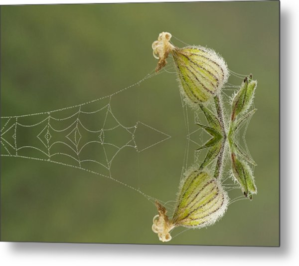 Spiderweb And Flower  Metal Print