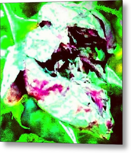 Spirit Of The Rose (face In Lower Metal Print