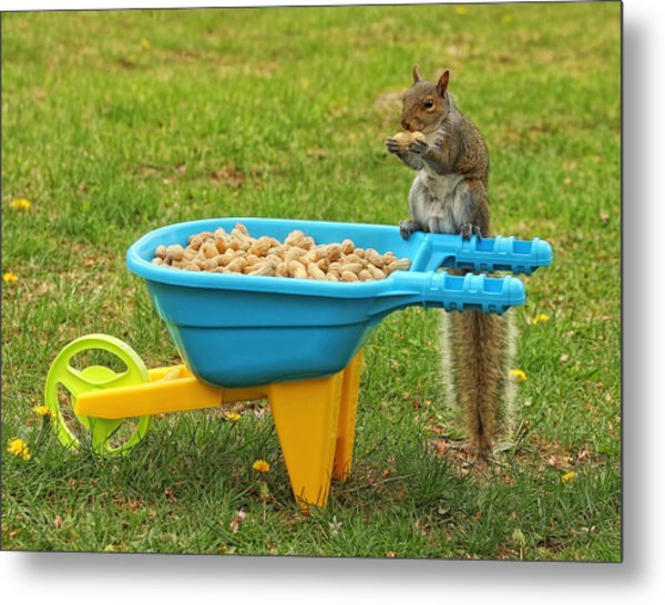 Spoiled Squirrel Metal Print