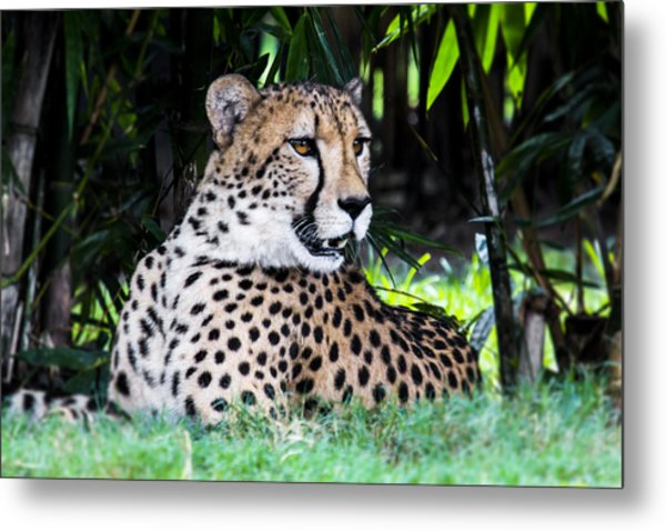 Spotted Metal Print by Nicholas Evans