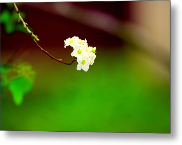 Spring Bud Metal Print by Bret Worrell