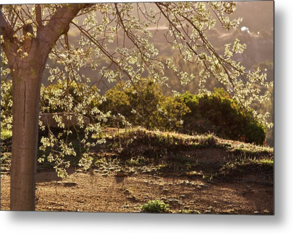 Spring Morning Light Metal Print