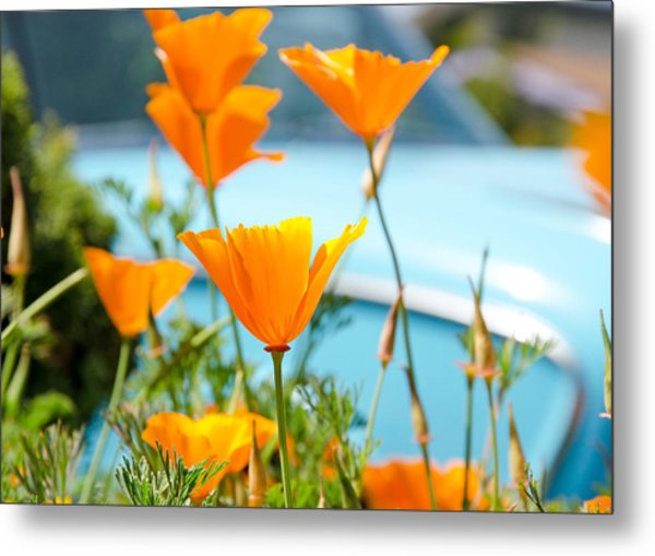 Metal Print featuring the photograph Spring Poppies by Margaret Pitcher