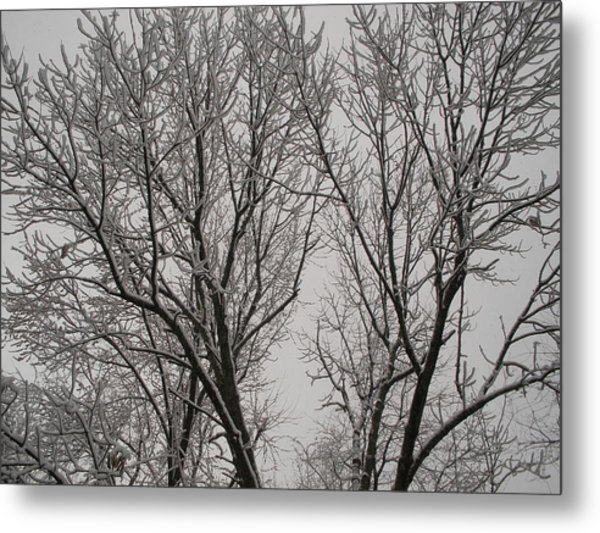 Spring Snow Metal Print by Suzanne Fenster