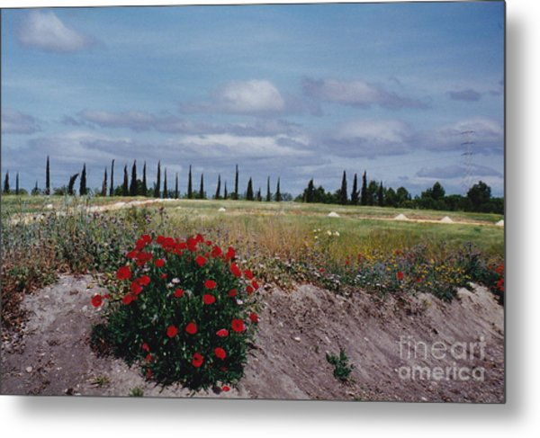 Springtime In Spain Metal Print by Barbara Plattenburg