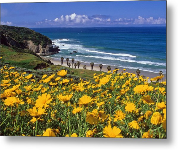 Springtime On The Headlands Metal Print