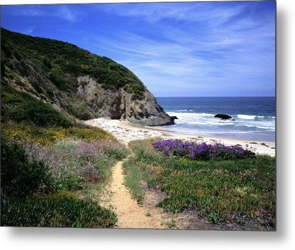 Springtime Trail  Dana Point Headlands Metal Print