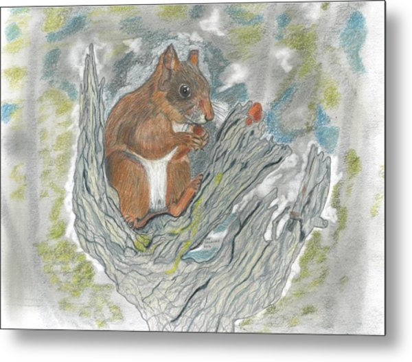 Squirrel Metal Print by Don  Gallacher