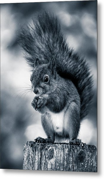 Squirrel In Monochrome Metal Print