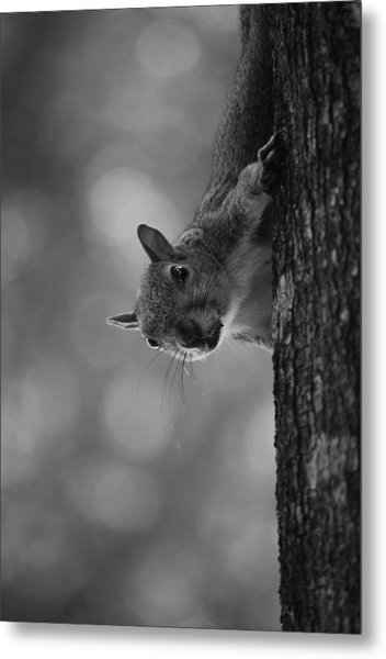 Squirrel On A Tree Metal Print by Carrie Munoz