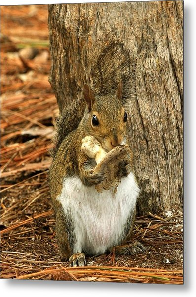 Squirrel On Shrooms Metal Print