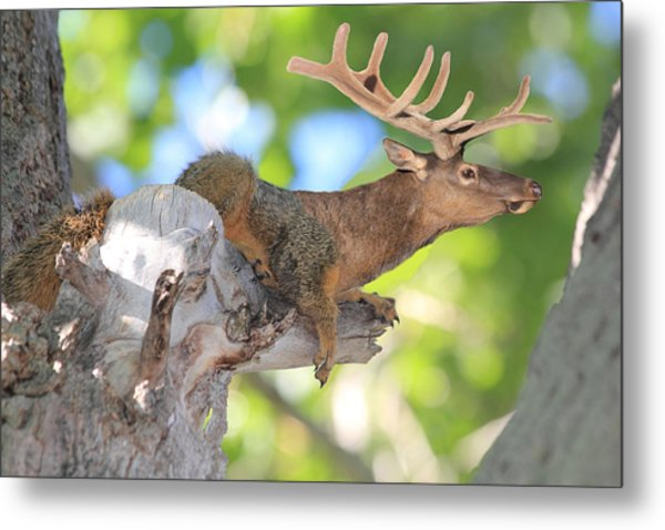 Metal Print featuring the photograph Squirrelk by Shane Bechler