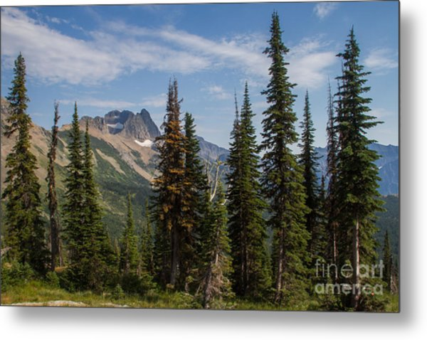 Metal Print featuring the photograph Standing Tall And Proud Are Mount Gould And Subalpine Fir 2 by Katie LaSalle-Lowery
