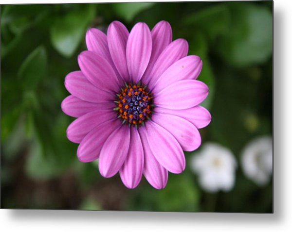 Standing Tall And Proud Metal Print