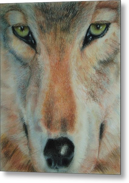 Staring Contest Metal Print by Joanna Gates