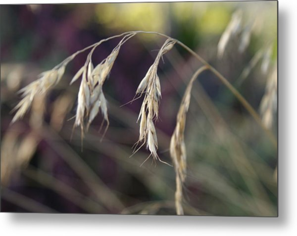 Stillness In The Wind Metal Print by Terrie Taylor