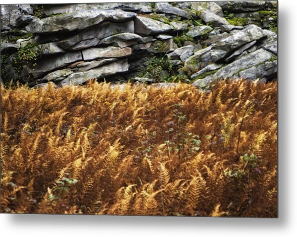 Stone Wall And Fern Metal Print