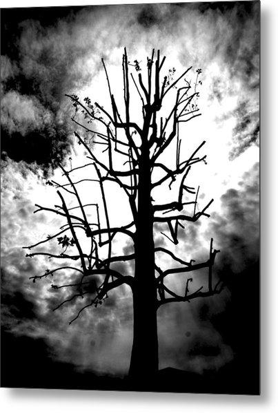 Storm Tree Metal Print