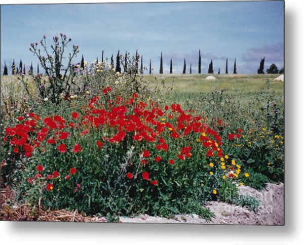 Striking Spanish Scenery Metal Print by Barbara Plattenburg