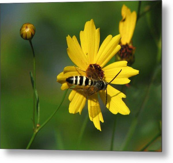 Striped Bee On Wildflower Metal Print
