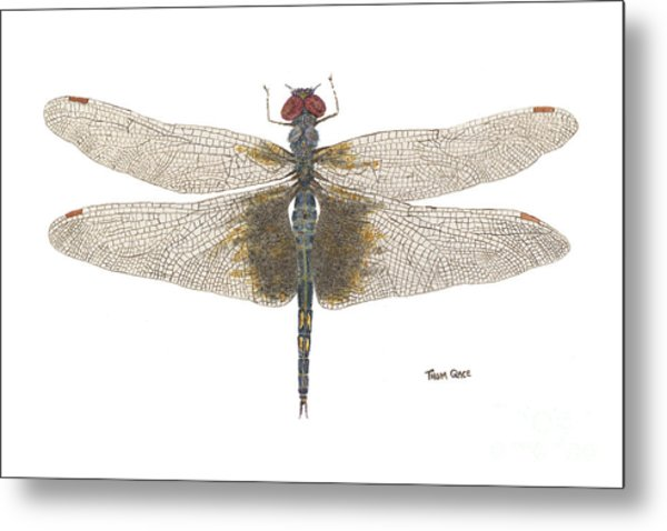 Study Of A Female Black Saddlebags Metal Print