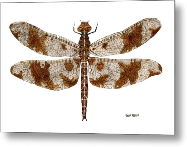 Study Of A Female Filigree Skimmer Metal Print