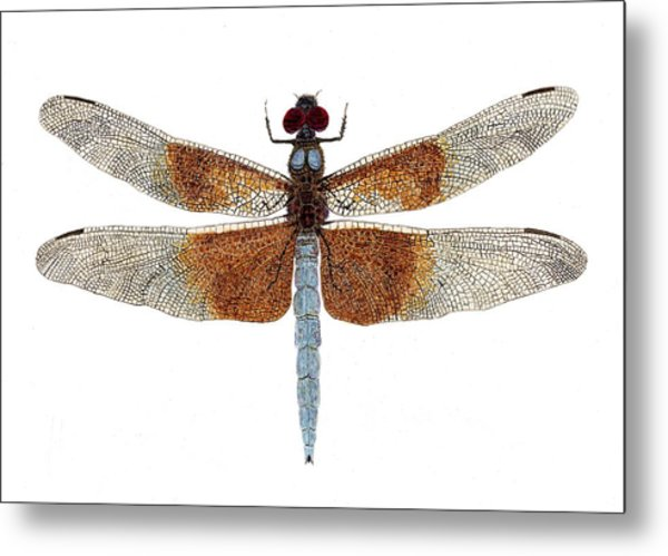 Study Of A Female Widow Skimmer Dragonfly Metal Print
