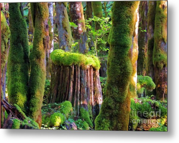 Stump And Moss  Metal Print