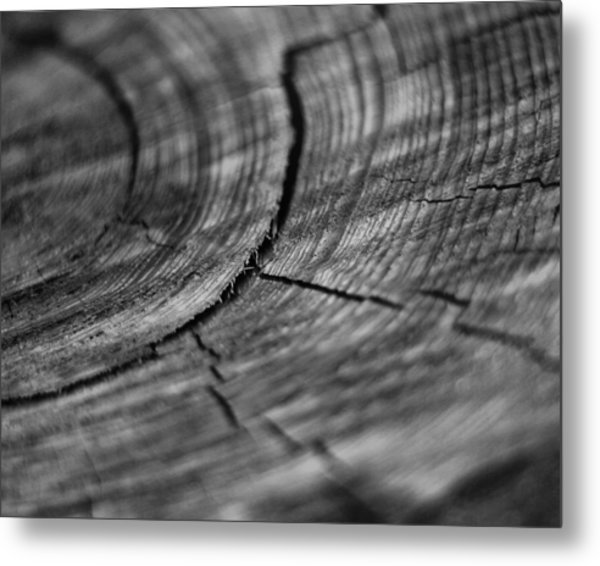Stump Metal Print