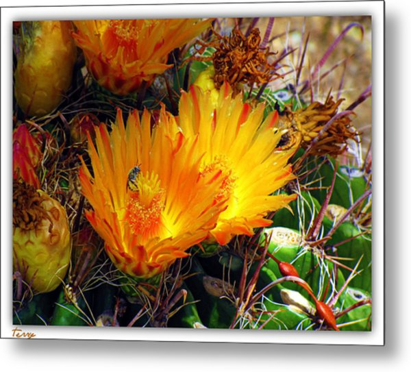 Summer Blooms Metal Print