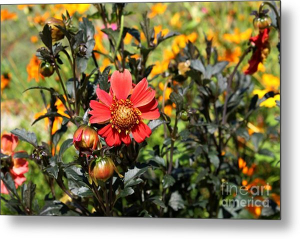 Summer Blossom Metal Print by Theresa Willingham
