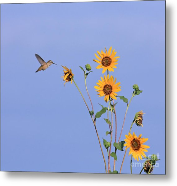 Summer Day Hummingbird Metal Print