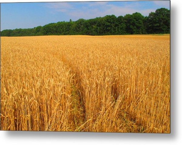 Summer In The Countryside  Metal Print by Lyle Crump