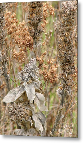 Summer Remnants Metal Print by Frank Townsley
