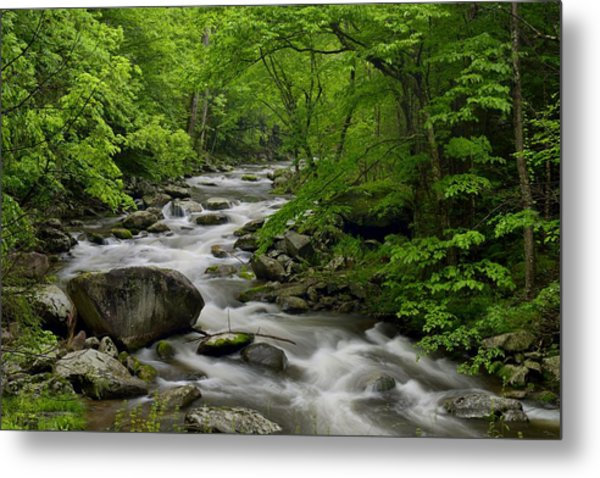 Summer Stream In Great Smoky Mountains  Metal Print by Darrell Young