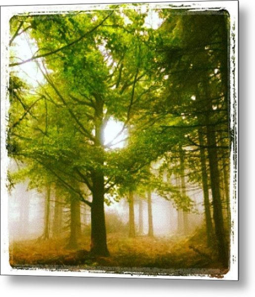 Summerskyforest Metal Print