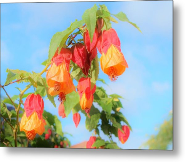 Sun Drenched Bell Flower Metal Print