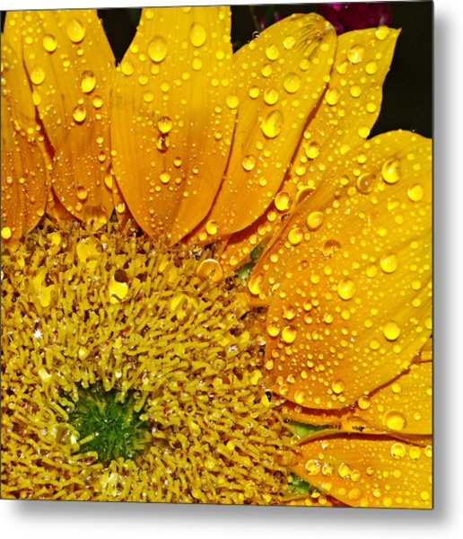 Sun Flower Metal Print by Michelle Armstrong