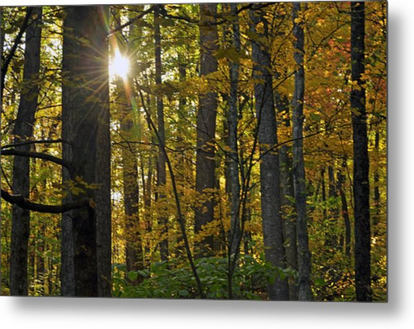 Sun In Trees Metal Print by Helen Haw