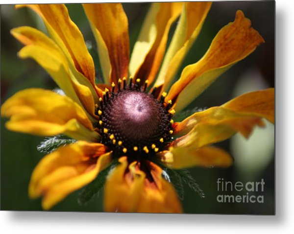 Sun On Flower Metal Print by David Taylor