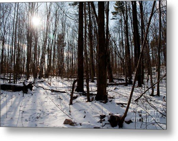Sun On The Wild Turkey Trail Metal Print by Gary Chapple