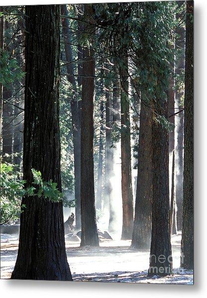 Sunbeams Through The Trees Yosemite National Park Color Metal Print