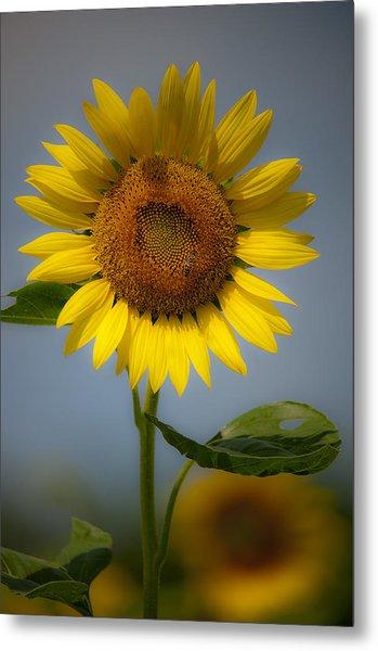Sunflower Bow Metal Print